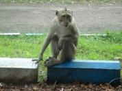Uncertain Monkey
