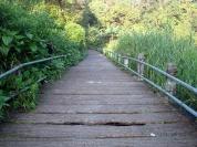 Holes in the bridge